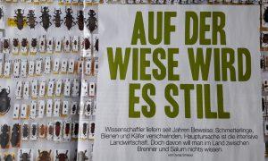 20180412_FF_Auf_der_Wiese_wird_es_still